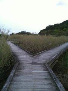Two Roads - Shimoda, Japan - May, 2013